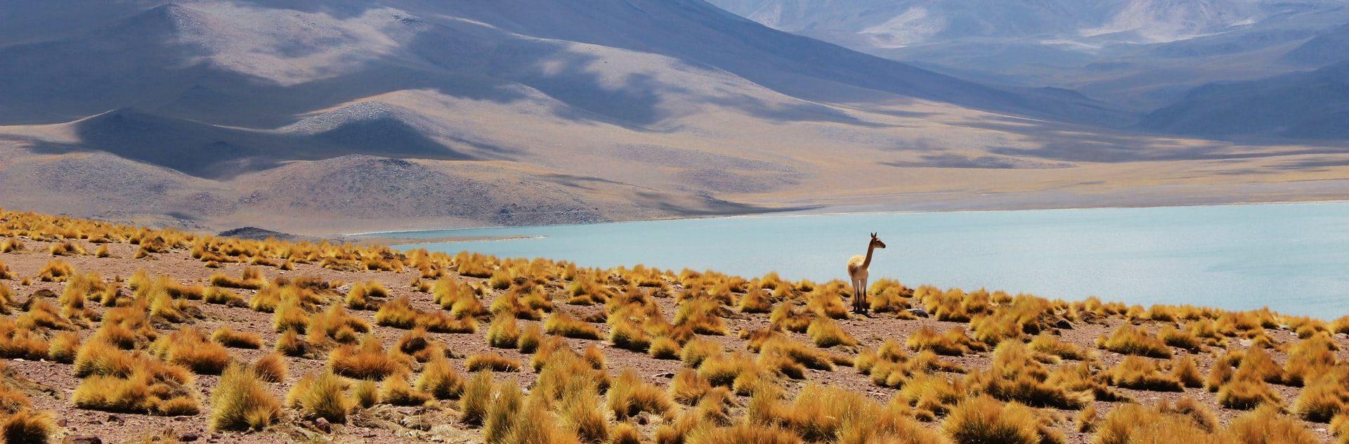 Programas para apoyar a los emprendedores turísticos rurales de Chile